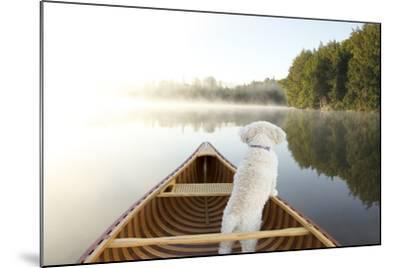 Small White Cockapoo Dog Navigating from the Bow of a Canoe on a Misty Lake - Ontario, Canada-Brian Lasenby-Mounted Photographic Print