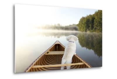 Small White Cockapoo Dog Navigating from the Bow of a Canoe on a Misty Lake - Ontario, Canada-Brian Lasenby-Metal Print