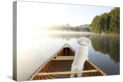 Small White Cockapoo Dog Navigating from the Bow of a Canoe on a Misty Lake - Ontario, Canada-Brian Lasenby-Stretched Canvas Print