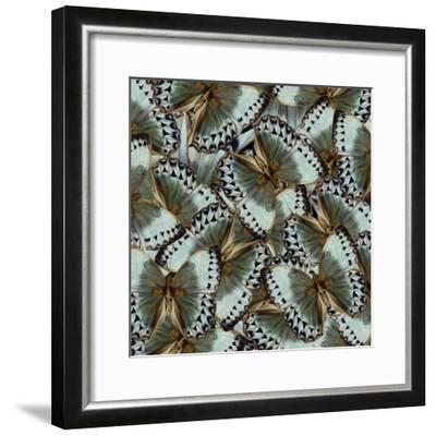 Exotic Grey and Pale Green Background Made of Cambodian Junglequeen Butterflies in the Greatest Des-Super Prin-Framed Photographic Print