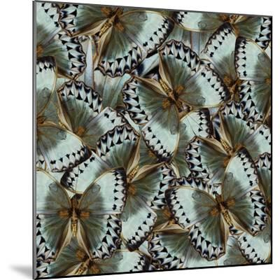 Exotic Grey and Pale Green Background Made of Cambodian Junglequeen Butterflies in the Greatest Des-Super Prin-Mounted Photographic Print