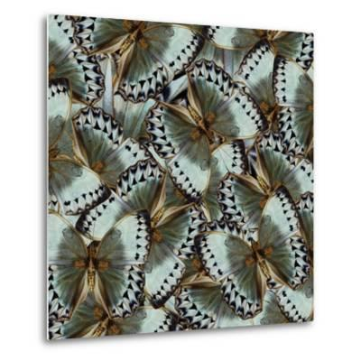 Exotic Grey and Pale Green Background Made of Cambodian Junglequeen Butterflies in the Greatest Des-Super Prin-Metal Print