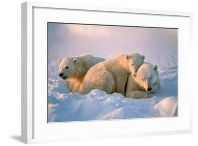 Polar Bear with Her Cubs-outdoorsman-Framed Photographic Print