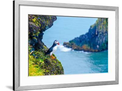 Puffin - Iceland-Simon Dannhauer-Framed Photographic Print