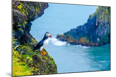 Puffin - Iceland-Simon Dannhauer-Mounted Photographic Print