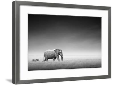 Elephant with Zebra behind on Open Plains of Etosha (Artistic Processing)-Johan Swanepoel-Framed Photographic Print