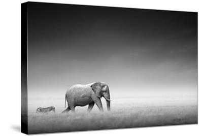 Elephant with Zebra behind on Open Plains of Etosha (Artistic Processing)-Johan Swanepoel-Stretched Canvas Print