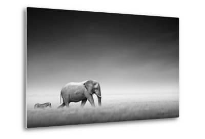 Elephant with Zebra behind on Open Plains of Etosha (Artistic Processing)-Johan Swanepoel-Metal Print