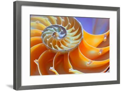 Close-Up of a Nautilus Shell Section- aabeele-Framed Photographic Print