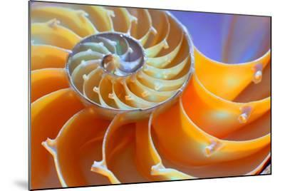 Close-Up of a Nautilus Shell Section- aabeele-Mounted Photographic Print
