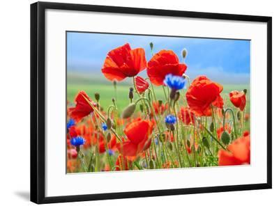 Field of Wild Poppies and Other Flowers-Maria Uspenskaya-Framed Photographic Print