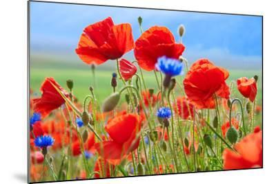 Field of Wild Poppies and Other Flowers-Maria Uspenskaya-Mounted Photographic Print
