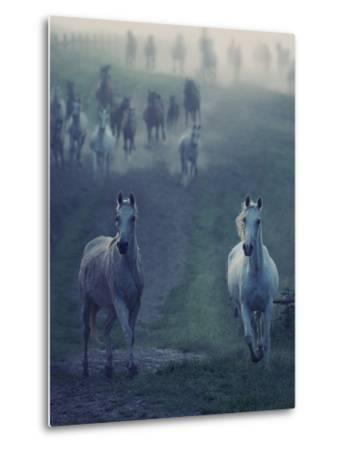 Wild Horses-conrado-Metal Print