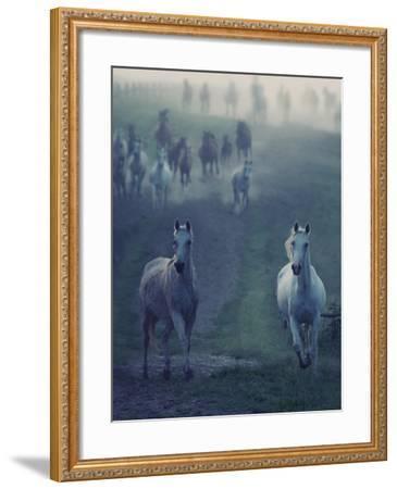 Wild Horses-conrado-Framed Photographic Print