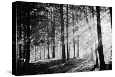 Pine Tree with Lights and Fog,Black and White Photo-hofhauser-Stretched Canvas Print