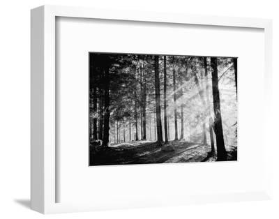 Pine Tree with Lights and Fog,Black and White Photo-hofhauser-Framed Photographic Print