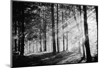 Pine Tree with Lights and Fog,Black and White Photo-hofhauser-Mounted Photographic Print