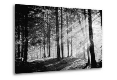 Pine Tree with Lights and Fog,Black and White Photo-hofhauser-Metal Print