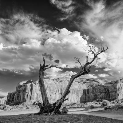 Monument Valley Juniper Tree and Mesa-Silvio Ligutti-Framed Photographic Print