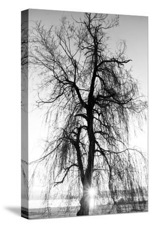 Spooky Abstract Black and White Tree Silhouette in Sunrise Time- SSokolov-Stretched Canvas Print