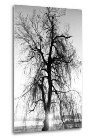 Spooky Abstract Black and White Tree Silhouette in Sunrise Time- SSokolov-Metal Print