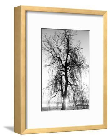 Spooky Abstract Black and White Tree Silhouette in Sunrise Time- SSokolov-Framed Photographic Print