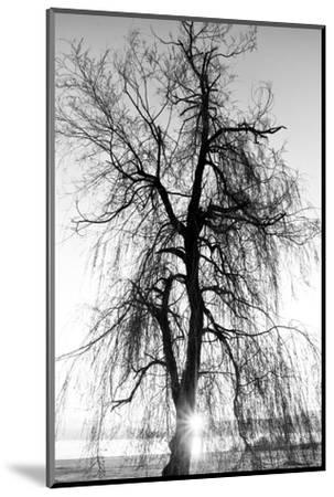 Spooky Abstract Black and White Tree Silhouette in Sunrise Time- SSokolov-Mounted Photographic Print