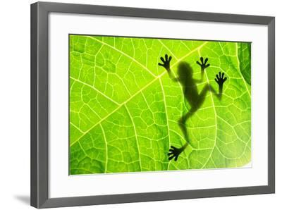 Frog Shadow on the Leaf-Patryk Kosmider-Framed Photographic Print