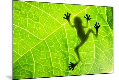 Frog Shadow on the Leaf-Patryk Kosmider-Mounted Photographic Print