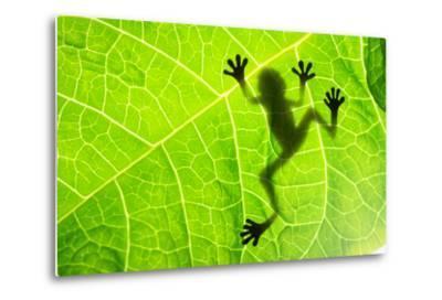Frog Shadow on the Leaf-Patryk Kosmider-Metal Print