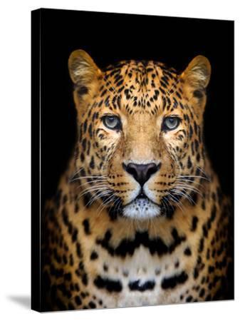 Close-Up Leopard Portrait on Dark Background-Volodymyr Burdiak-Stretched Canvas Print