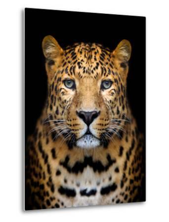 Close-Up Leopard Portrait on Dark Background-Volodymyr Burdiak-Metal Print