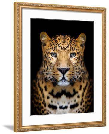 Close-Up Leopard Portrait on Dark Background-Volodymyr Burdiak-Framed Photographic Print