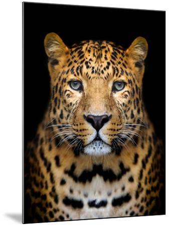 Close-Up Leopard Portrait on Dark Background-Volodymyr Burdiak-Mounted Photographic Print