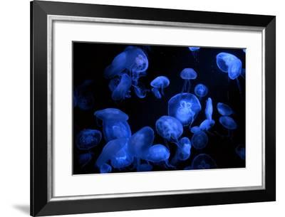 Jellyfish with Blue Light on Black Background in the Aquarium, Singapore- Niradj-Framed Photographic Print