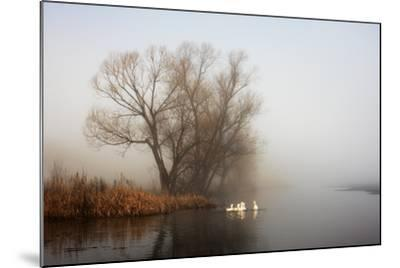 Geese in Fog. Flock of Birds Swims near Shore of River under Trees. Beautiful Spring Landscape in M- arvitalyaa-Mounted Photographic Print