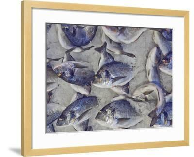 Silver Sea Bream for Sale at the Central Market- Dimitrios-Framed Photographic Print