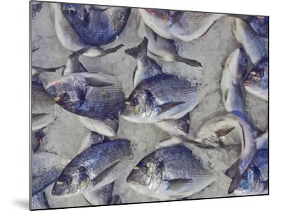Silver Sea Bream for Sale at the Central Market- Dimitrios-Mounted Photographic Print
