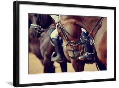 Portrait of a Sports Stallion. Riding on a Horse. Thoroughbred Horse. Beautiful Horse.-Elya Vatel-Framed Photographic Print