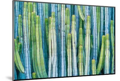 DETAIL VIEW OF THE CARDON CACTUS IN SUMMER WITH RICH BLUE GREEN AND TORQOUISE COLORS-ED Reardon-Mounted Photographic Print