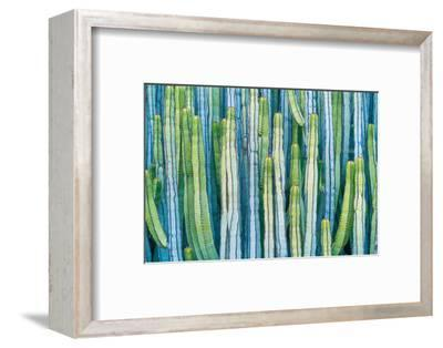 DETAIL VIEW OF THE CARDON CACTUS IN SUMMER WITH RICH BLUE GREEN AND TORQOUISE COLORS-ED Reardon-Framed Photographic Print