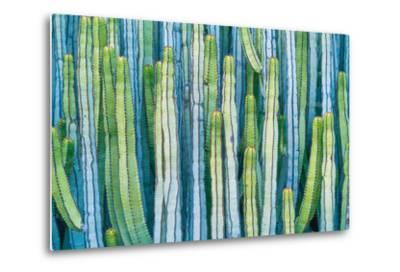 DETAIL VIEW OF THE CARDON CACTUS IN SUMMER WITH RICH BLUE GREEN AND TORQOUISE COLORS-ED Reardon-Metal Print