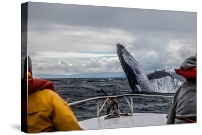 Whale Jump-Alexey Mhoyan-Stretched Canvas Print