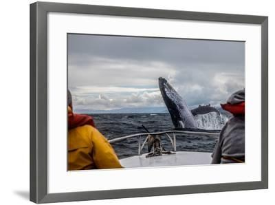 Whale Jump-Alexey Mhoyan-Framed Photographic Print