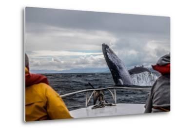 Whale Jump-Alexey Mhoyan-Metal Print