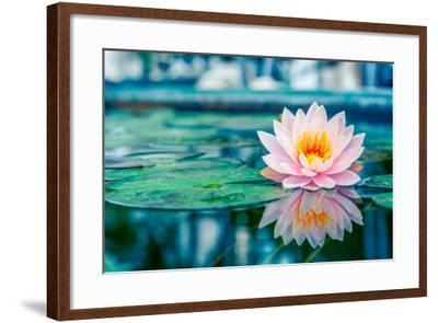 Beautiful Pink Lotus, Water Plant with Reflection in a Pond-Vasin Lee-Framed Photographic Print