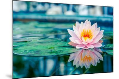 Beautiful Pink Lotus, Water Plant with Reflection in a Pond-Vasin Lee-Mounted Photographic Print