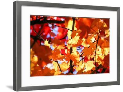 Autumn Leaves Background-Nikolay Etsyukevich-Framed Photographic Print