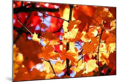 Autumn Leaves Background-Nikolay Etsyukevich-Mounted Photographic Print
