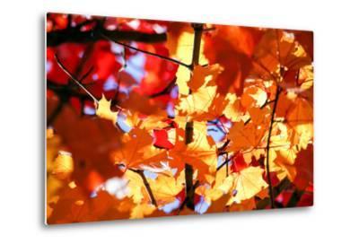 Autumn Leaves Background-Nikolay Etsyukevich-Metal Print